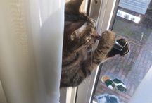 Kattenkwaad / Over Moos, onze kat-van-de-achterburen