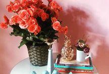 Begônia / A begônia está entre as flores para jardim mais comuns e de fácil cultivo. Existem mais de mil espécies e diversas variedades híbridas de begônias, cada uma com seu encanto. É uma planta muito apreciada pela beleza das suas flores e de suas folhas!