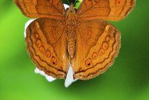 Бабочка и стрекоза
