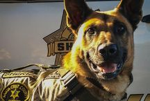 Sheriff's Office Canine / Dedicated to all our hardworking handlers and their four legged partners, past and present.