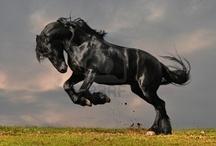 horsies!!!! / by Leslie Ann