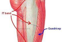 gluteální svaly