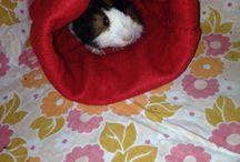 Guinea pig accessories