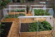 Garden- Vegetable garden