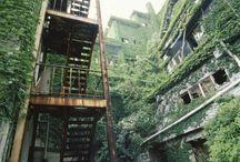 Abandon green
