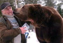 Bear man Sulo Karjalainen from Finland