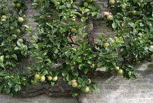 meyve ağaçları ve bakımı