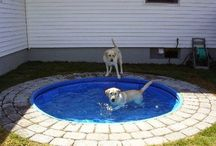 Dog Days of Summer / Adorable photos of dogs enjoying the summertime!