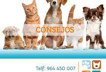Consejos / En este tablero encontrarás grafismos e imágenes que te ayudarán y aconsejarán en la vida diaria con tu mascota.