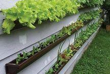 Trädgård växter