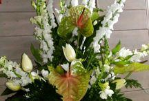 Floreal di Galletta Andrea