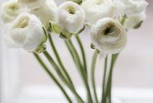 Floora / flowers and plants
