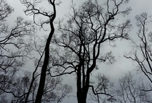 forests / ...their majestic presence...