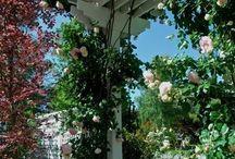Garden design ideas / Garden design ideas