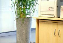 Rośliny do biura / http://officeplant.pl/ rośliny do biur