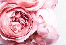 Virág kephez