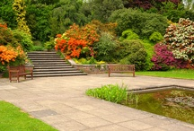 Harjupuutarha / Kuivaan ja auringonpaisteeseen kasvupaikkaan sopivia lehtipuita, havuja, pensaita, perennoja, heiniä ja sipulikasveja.
