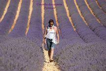 """Lavandas - Força guerreira  pela  Jornada Sagrada da Vida /  O verdadeiro guerreiro está sempre armado com três coisas: a espada radiante da pacificação, o espelho cristalino da sabedoria e amizade, e a joia preciosa da luz Divina."""" E esta luz Divina não está no céu nem na terra, está dentro de cada UM.""""  Paulo Coelho"""
