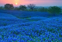 TEXAS / by Raylene Haster