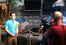Sea Life TV / Sea Life Centre Birmingham has set up Sea Life TV on their You Tube channel.  CMA Video have filmed some of the news articles and latest developments.