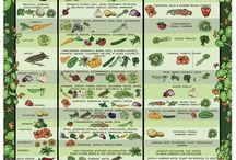 Jardinagem _ Companion planting / by Rosa Chaves