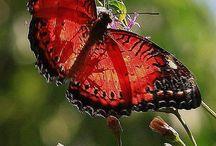 Beestjes / Vlinders