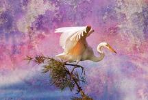 Beautiful Birds ~ Artistic