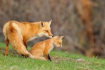 The Fox and the Rabbit.. / by T W