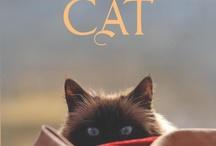 TIERE: Katzenaugen