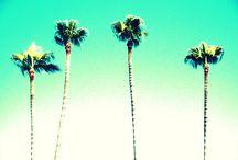 Miami / All things Miami / by Citrine Rain