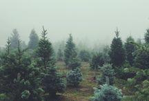 Inspiration | Winter