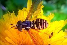 Pszczeli kącik artysyczny / Pszczoły malowane na drewnie i papierze. Pszczele kolorowanki i mini komiksy. Zakładki do książek z pszczółkami. Fotografie. To kolejny sposób na promowanie tych przyjaznych owadów. Obejrzyj prace naszych uczniów.