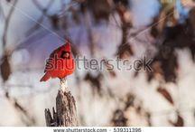 Bird Photography / Song birds