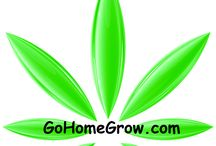 Go Home Grow / Go Home Grow, the fight for a home grow law in Florida for medical cannabis patients. How to grow marijuana education. GoHomeGrow.com