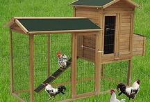 høner i bakgården
