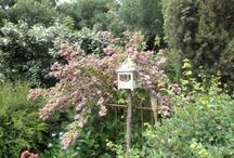 dans mon jardin / by Bénédicte Caffin