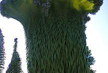 Crystata plants