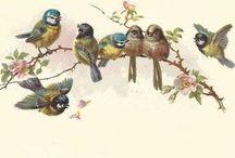 винтаж птицы