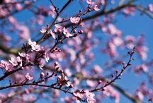 Frühling / Ich bin ein Frühlingskind und liebe diese Jahreszeit!