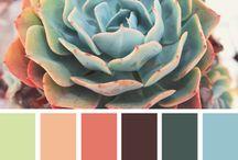 суккулент color
