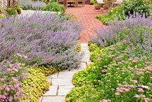 Gardens / Pictures of french, english, urban and country gardens for inspiration.