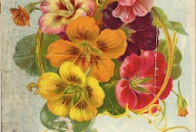 Seed Packets and Garden Ephemera