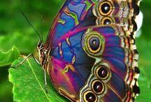 Butterflies / Colorful displays