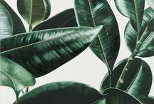 Planten in kantoor