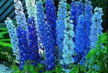 flores naturales y jardines