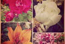 flowers/blommor