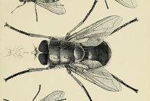 Hmyz (Klauzúry)
