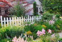 Home: Garden  / by Susan A
