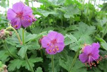 Beautiful Flowers / 0