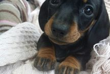 Adorable Puppies You'll Love